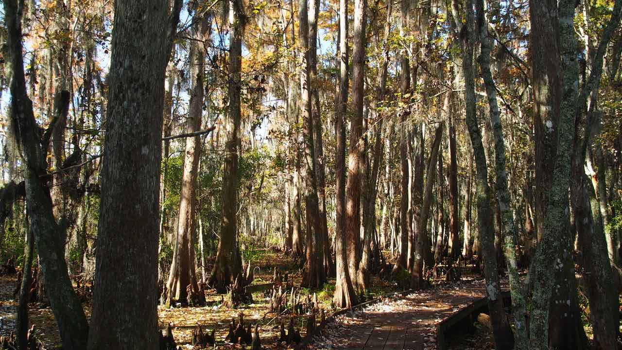 im Jean Lafitte Nationalpark
